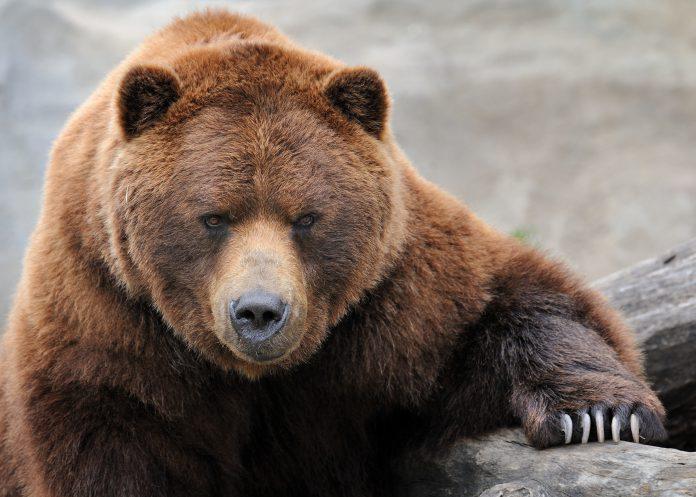 Bears Linger in Debt Laden Steelmaker: Options Recap
