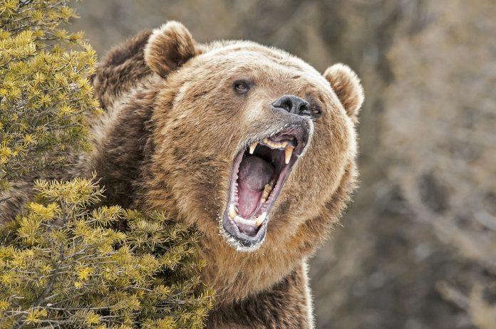 Deere, Lowe's Deliver a Bearish End to Earnings Season